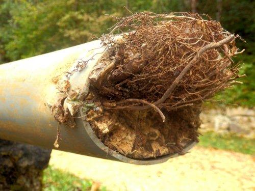 Drain blocked by tree root ingress